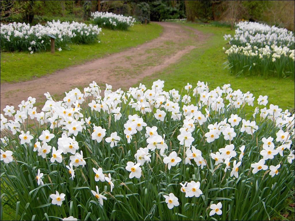 Fairhaven Woodland And Water Gardens Norfolk Broads