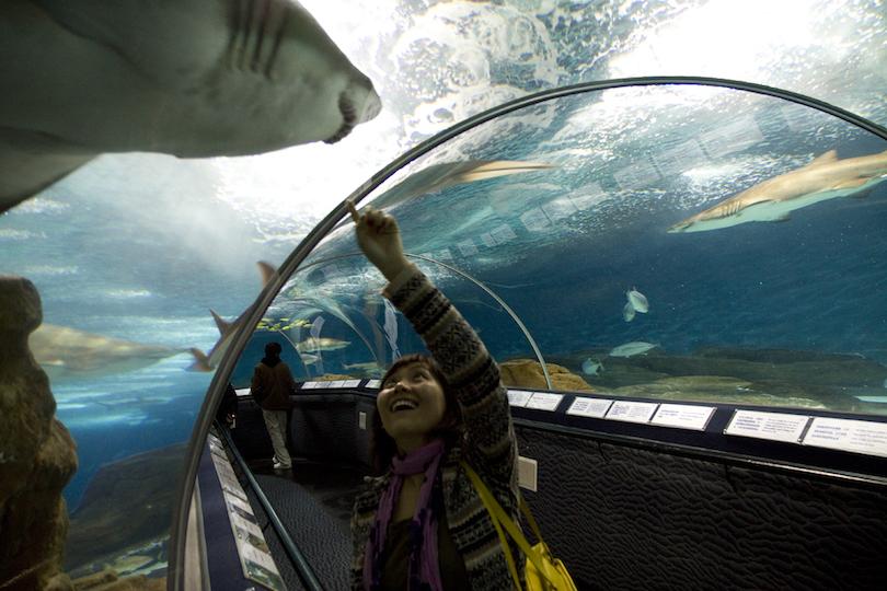 10 largest aquariums in