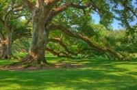 Oak Alley Plantation & Laura Plantation Tour On ...