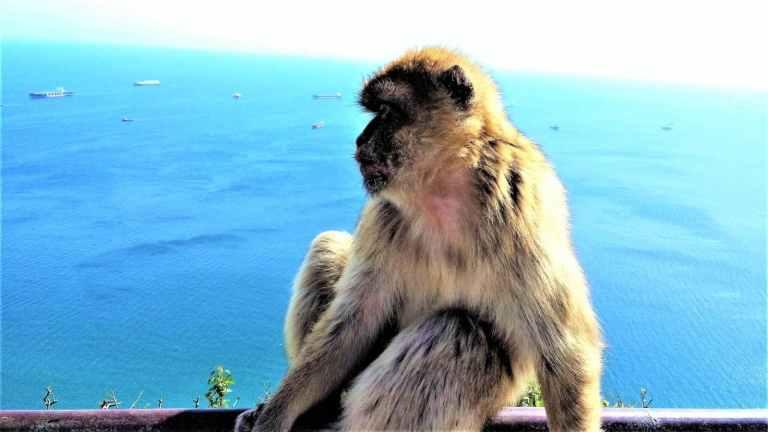 Gibraltar private trip