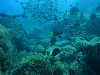 Diving Baja Loreto Sea and Land Tours