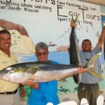 Yellow Tail Sport Fishing March-May