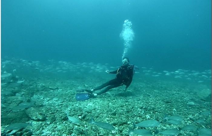 Fall Diving Loreto Sea of Cortez