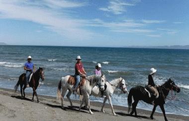 Beach Horseback Rides Loreto Baja California Sur