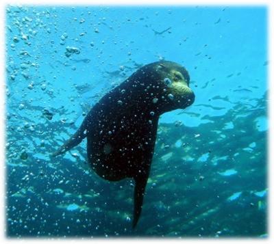 Sea Tours Loreto Baja California Sur