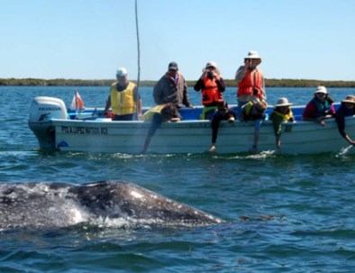 Grey-Whales-by-boat.jpg
