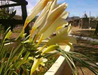 spring-flowers-rancho-nuevo.jpg