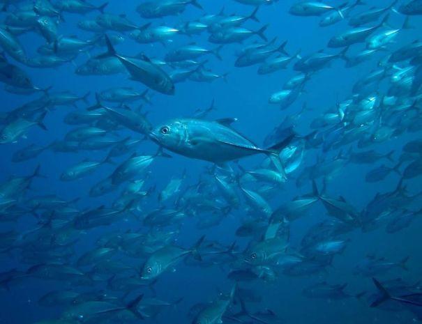 Diving Isla Danzante