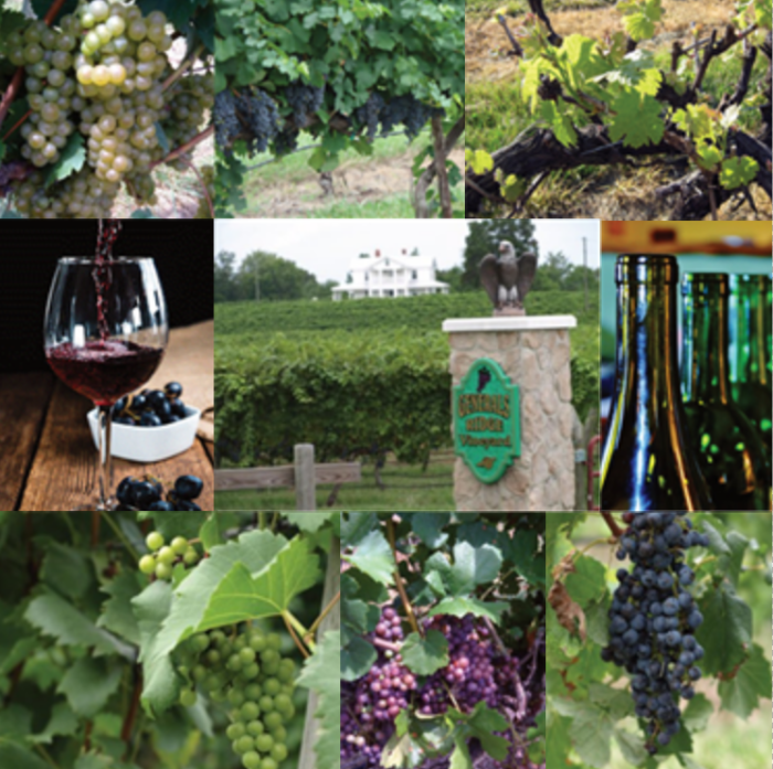 Wineries Tour Collage