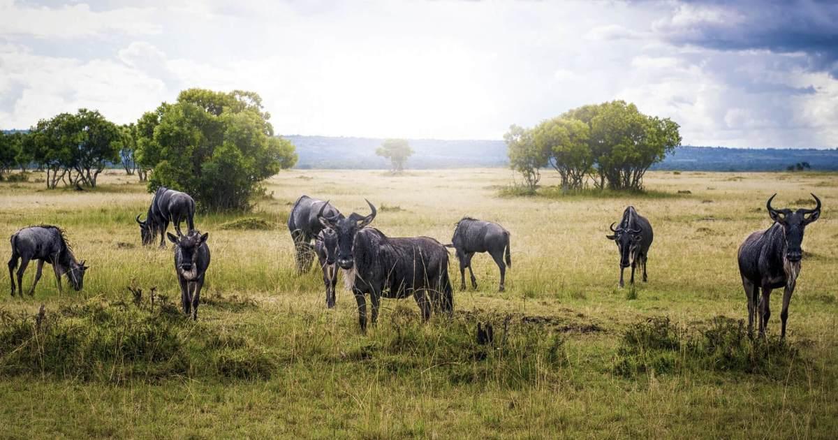 Tourist Attractions in Kenya