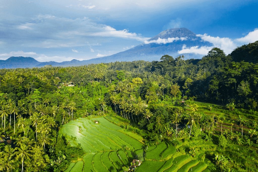 Tourist Attractions in Bali