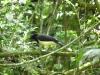 iguazu-19_argentine_ilot-saint-martin_oiseau-non-identifie