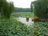 barques-et-lotus