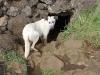 grotte-des-2-fenetres-1