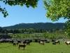 region-des-vins-d_hastings-3