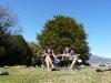 Nouvelle Zélande : Hibiscus