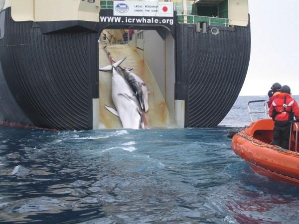 peche-a-la-baleine-japon