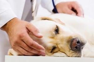 examiner-son-chien