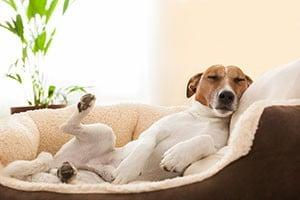 """Résultat de recherche d'images pour """"chien panier"""""""