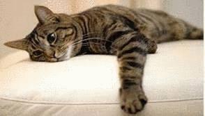 Mon chat a fait pipi sur le canap  Tout pratique