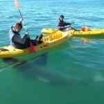 Salmoni and the Shark: VIDEO