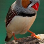 News: Anchorage, Zebra Finches, Janet Jackson, Purdue