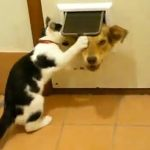 Supercut of Cats Behaving Badly: VIDEO