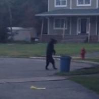 New Jersey Bear Strolls Through Neighborhood On Two Legs: VIDEO
