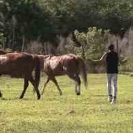 Prancers Everywhere Cheer As 'Prancercise' Guru Joanna Rohrback Returns With New Video: WATCH
