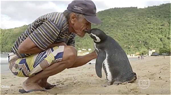 Penguin swims