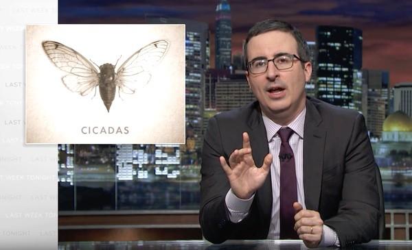 Cicadas John Oliver