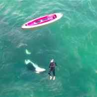 kayaker orca