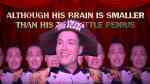 randy rainbow stable genius