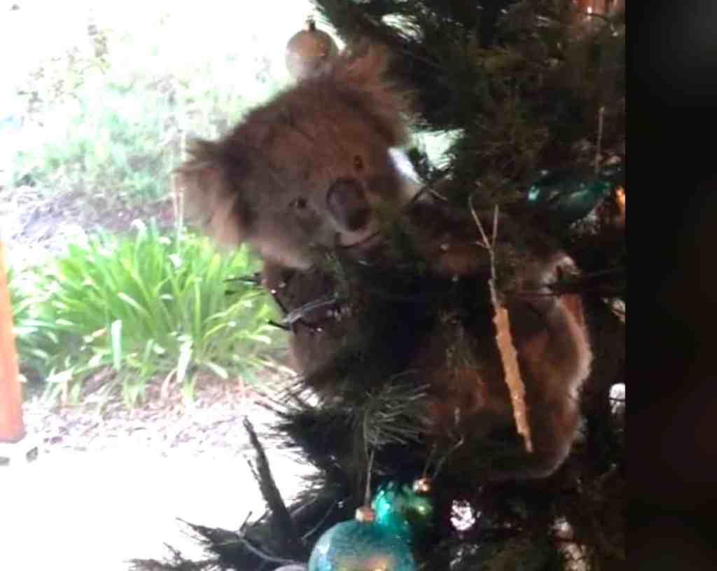 koala Christmas tree