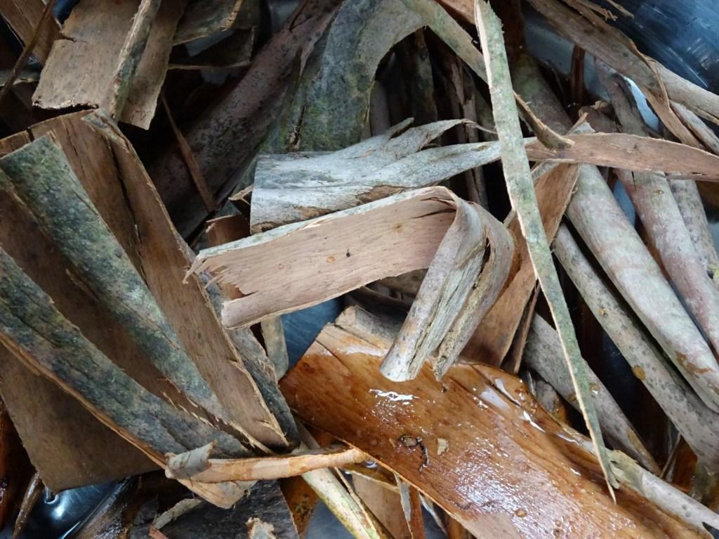 eucalyptus bark (2)