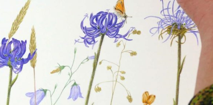 Wild flower painting by Sarah Morrish
