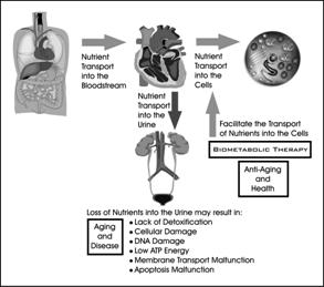 Biometabolic Analysis (January 2011) Townsend Letter for
