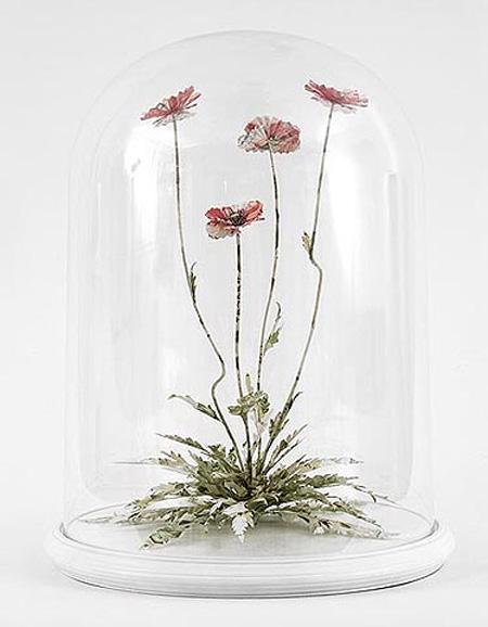Poppy by Justine Smith