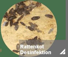 Rattenbekmpfung Notdienst  toxtron in Essen Oberhausen Kammerjger Schdlingsbekmpfung NRW