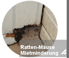 Rattenbekmpfung Notdienst  toxtron in Essen Oberhausen