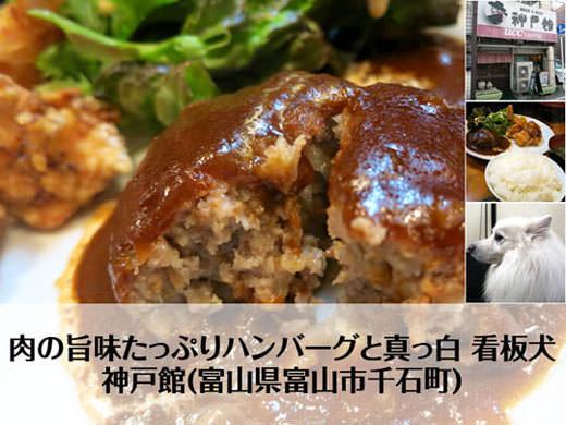 神戸館 旨味たっぷりハンバーグと真っ白 看板犬