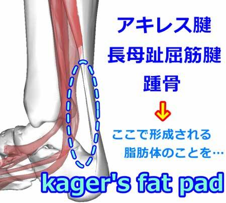 Kager's fat pad