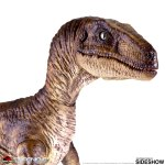 chronicle-collectibles-velociraptor-sixth-scale-figure-jurassic-park-img05