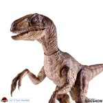 chronicle-collectibles-velociraptor-sixth-scale-figure-jurassic-park-img06