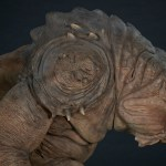 sideshow-collectibles-rancor-deluxe-statue-star-wars-collectibles-lucasfilm-img18