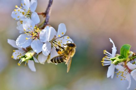 honey bee NATURAL, PROBIOTIC AND ORGANIC PRODUCTS