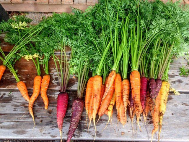 """carote carota arancione viola vitamine verdura vegetale  LA LISTA NERA DELLE PIANTE """"PROIBITE"""" NELL'ANTICHITÀ"""