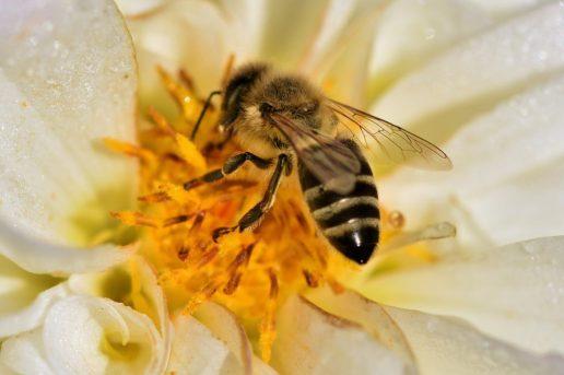 ape miele naturale PRODOTTI NATURALI, PROBIOTICI E BIOLOGICI