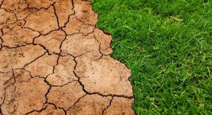 erba siccità campo terra
