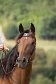 riendas caballo